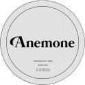 Anemone 34