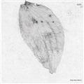 Stroboscopic Artefacts 36